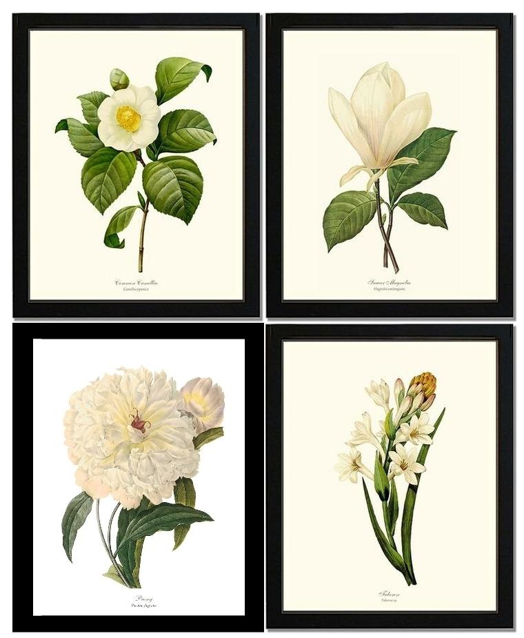 Framed Vintage White Flower Botanical Print Set: 4 8X10 Black Throughout Black Framed Art Prints (Image 9 of 15)