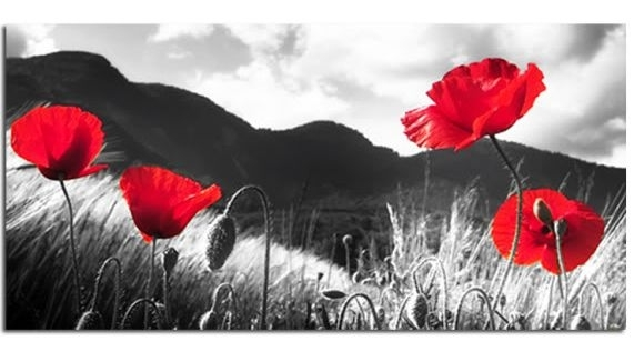 L Est We Forget Poppies Canvas Wall Art Picture 40 Inch 102 Cm For Poppies Canvas Wall Art (Image 7 of 15)