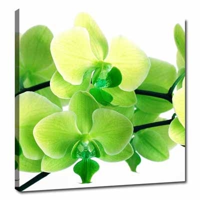 Lime Green | Lime Green Canvas Wall Pictures Floral Art Pertaining To Lime Green Canvas Wall Art (Image 7 of 15)