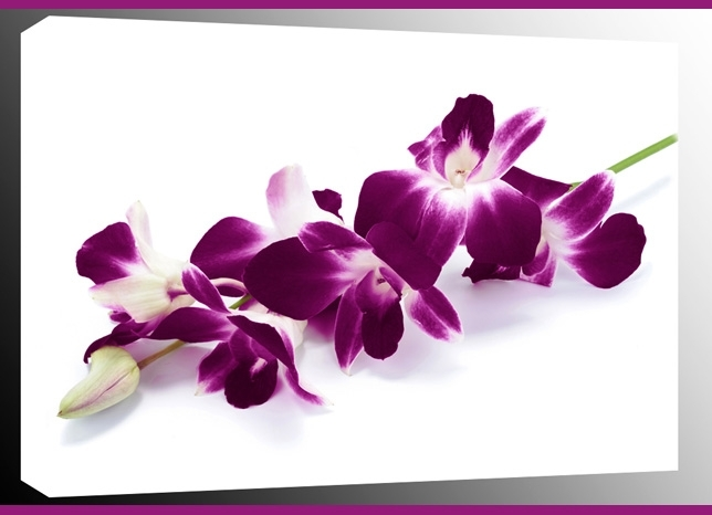 Orchid Spray On White Single Canvas Wall Art 47 X 32 Inch 119 X 82 Cm Throughout Orchid Canvas Wall Art (Image 10 of 15)