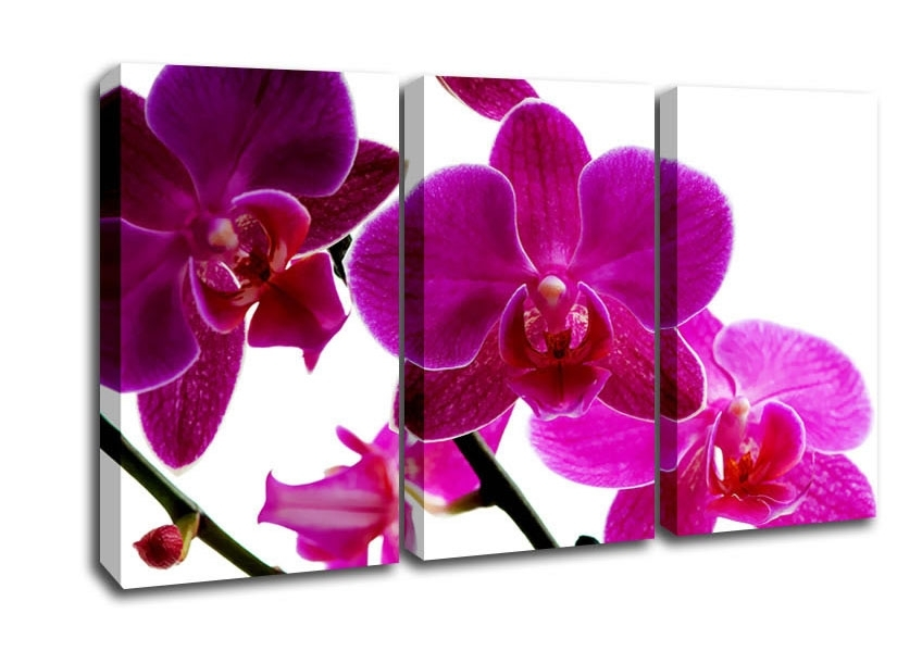 Pink Orchid Flowers 3 Panel Canvas 3 Panel Set Canvas Intended For Orchid Canvas Wall Art (View 11 of 15)