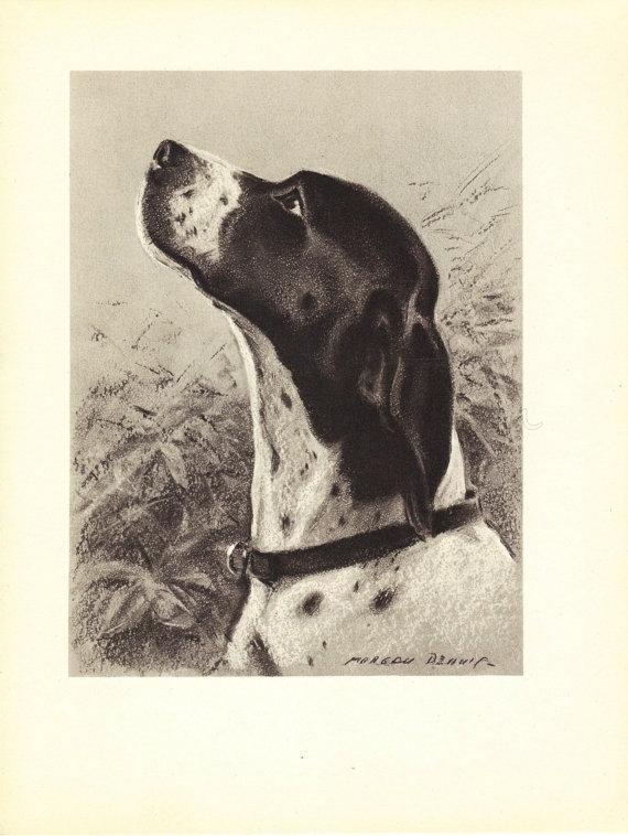 Pointer 1940S Vintage Dog Print, Morgan Dennis, Wall Decor, Art For Dog Art Framed Prints (Image 12 of 15)
