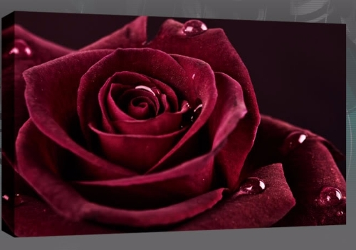 Roses Canvas Wall Art Pertaining To Roses Canvas Wall Art (Image 12 of 15)