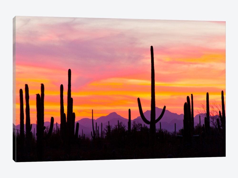 Saguaro Cacti At Sunset I, Saguaro Natio | Cathy & Gordon Illg For Arizona Canvas Wall Art (View 9 of 15)