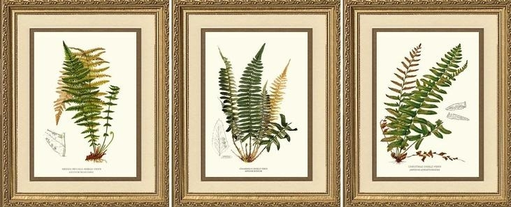 Sierra Nevada, Chamissos And Christmas Shield Ferns | Charting Throughout Framed Botanical Art Prints (Image 11 of 15)