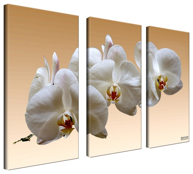 Featured Image of Orchid Canvas Wall Art