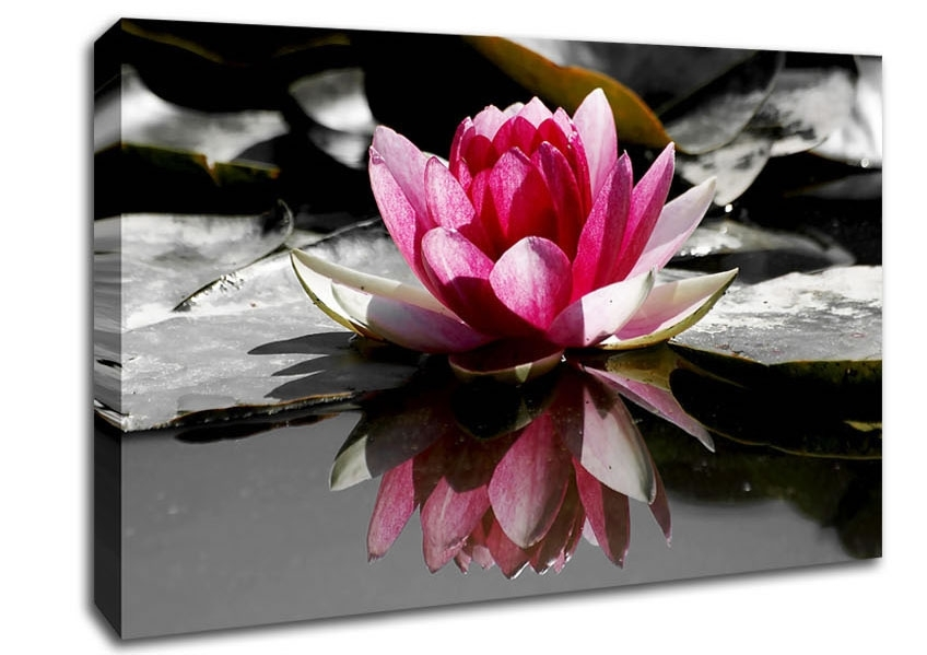 Wall Art Designs: Pink Wall Art Pink Water Lily Reflections Home Throughout Pink Canvas Wall Art (Image 12 of 15)