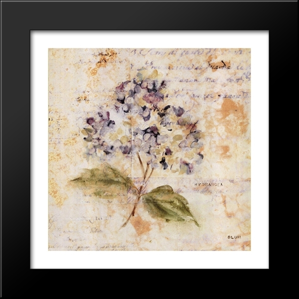 White Washed Hydrangea 16X16 Black Wood Framed Art Printcheri With Cheri Blum Framed Art Prints (View 8 of 15)