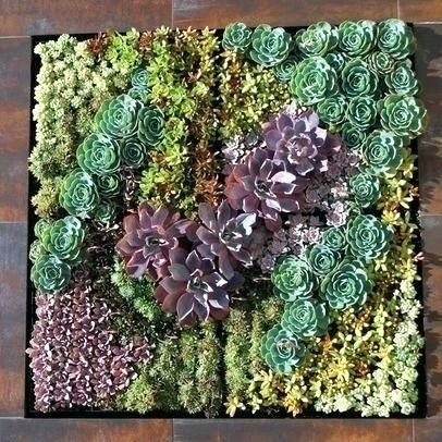 Air Garden Wall Plant Art Succulent Wall Garden Air Plant Wall Art With Succulent Wall Art (Image 2 of 25)
