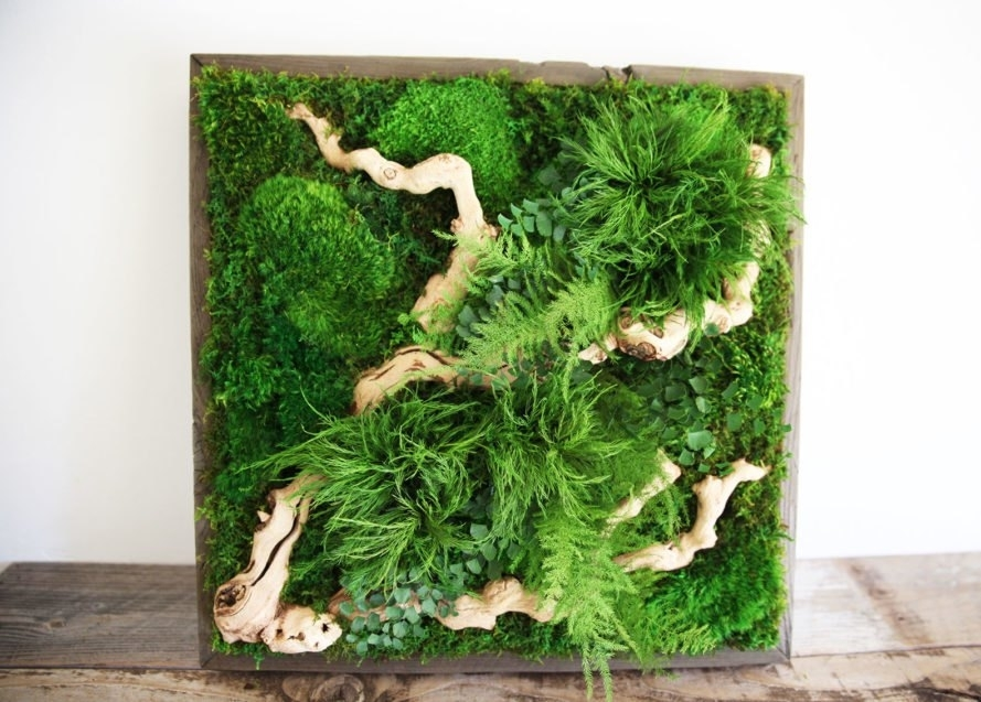 Artisan Moss 'plant Paintings' Are Maintenance Free Alternatives To Inside Moss Wall Art (View 3 of 25)