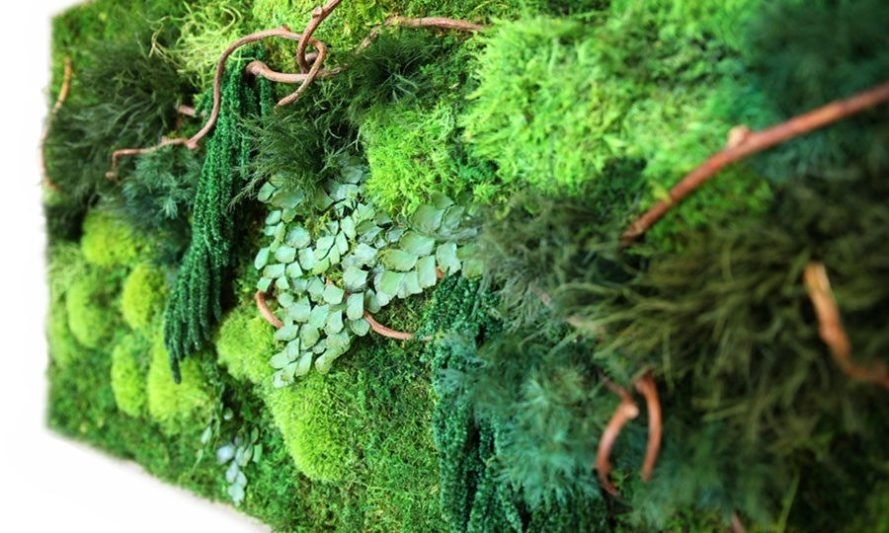 Artisan Moss 'plant Paintings' Are Maintenance Free Alternatives To With Regard To Moss Wall Art (View 25 of 25)