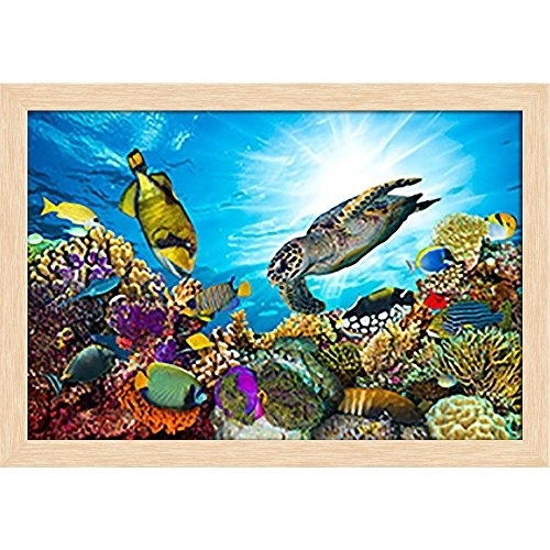 Artzfolio Coral Reef With Fishes And Sea Turtle – Small Size 17Inch Throughout Sea Turtle Canvas Wall Art (View 21 of 25)