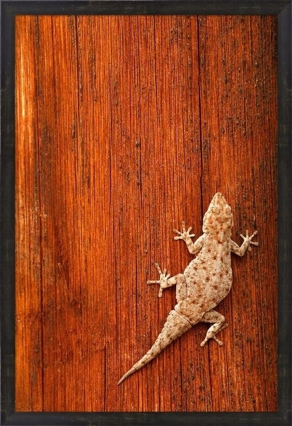 Buy Tokay Gecko Lizard, Striated Wood, Africadavid Slater In Gecko Canvas Wall Art (View 18 of 20)