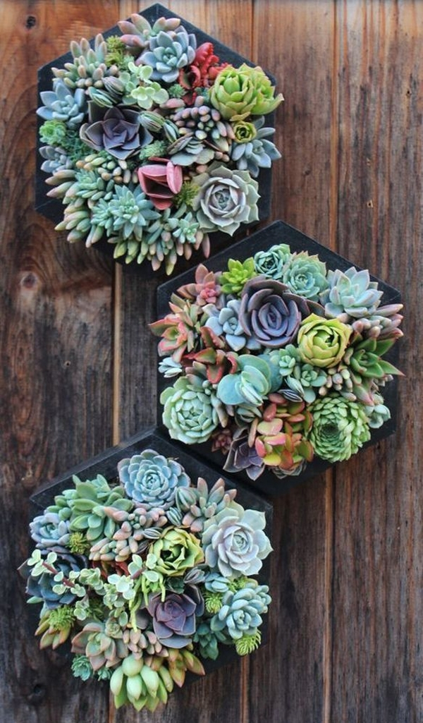 Colorful Succulent Wall Art Decorations Intended For Succulent Wall Art (Image 4 of 25)