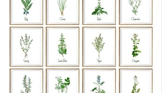 Contemporary Herb Wall Art Home Decorating Ideas Featured Photo Of Throughout Herb Wall Art (Image 2 of 20)