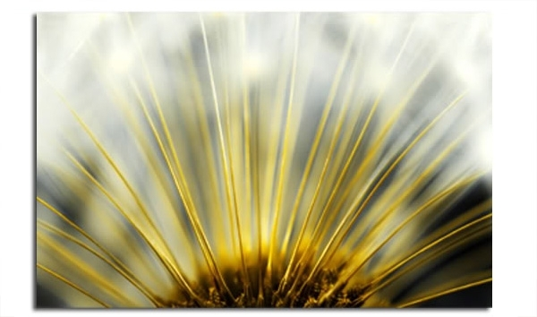 Dandelion Heart Floral Abstract Wall Art Picture 30X20 Inch (View 15 of 25)