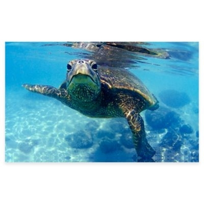 Friendly Turtle Canvas Wall Art Multi | Products Within Sea Turtle Canvas Wall Art (View 5 of 25)