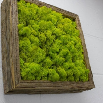 Green Moss Frame – Water Free Green Wall From Flowerboxusa On For Moss Wall Art (Image 10 of 25)