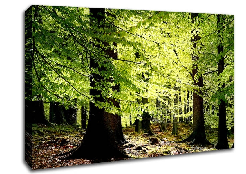 Green Wall Art And Wall Decor | Wallartdirect.co (Image 13 of 25)