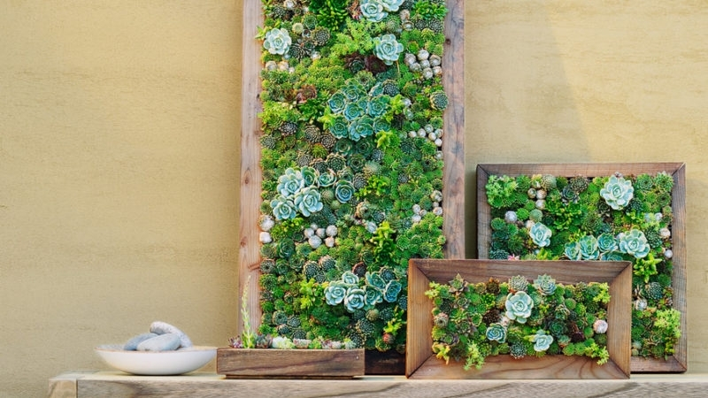 How To Make Vertical Succulent Gardens – Sunset Magazine Intended For Succulent Wall Art (Image 11 of 25)