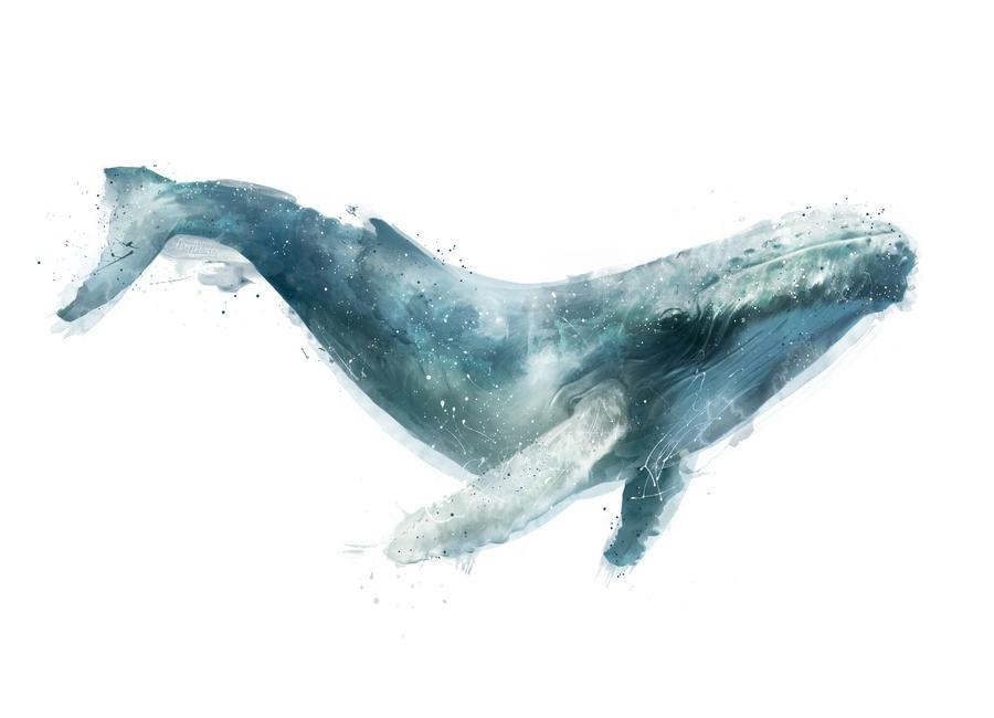 Humpback Whale As Canvas Printamy Hamilton | Juniqe For Whale Canvas Wall Art (Image 9 of 25)