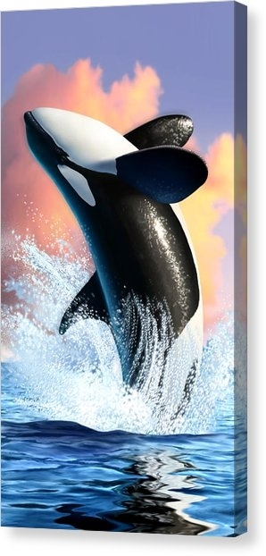 Killer Whale Canvas Prints | Fine Art America In Whale Canvas Wall Art (View 12 of 25)