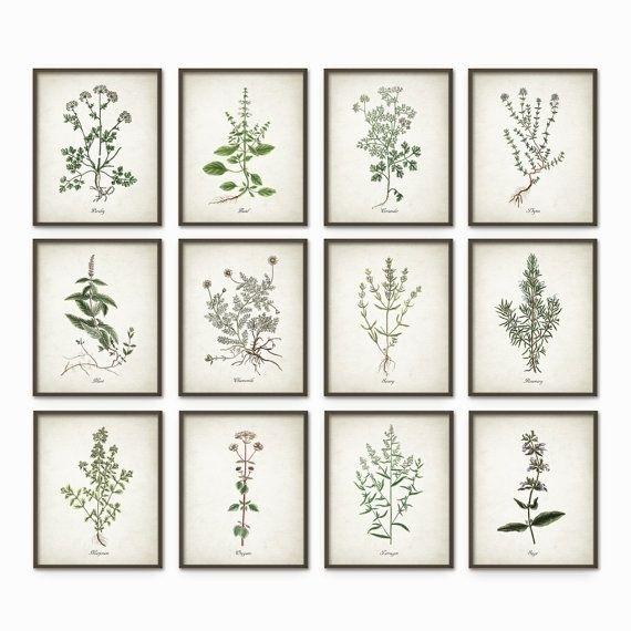 Kitchen Herbs Wall Art Print Set Of 12 – Vintage Botanical Herb Inside Herb Wall Art (Image 13 of 20)