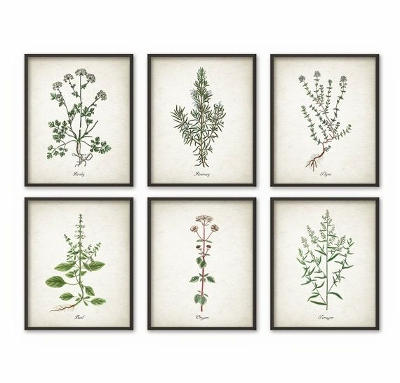 Kitchen Herbs Wall Art Print Set Of 6 – Vintage Botanical Herb Intended For Herb Wall Art (Image 14 of 20)