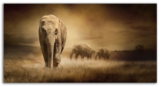 Large Elephants Sepia Wall Art 103 X 52 Cm Canvas Wall Art Picture Intended For Elephant Canvas Wall Art (View 6 of 20)