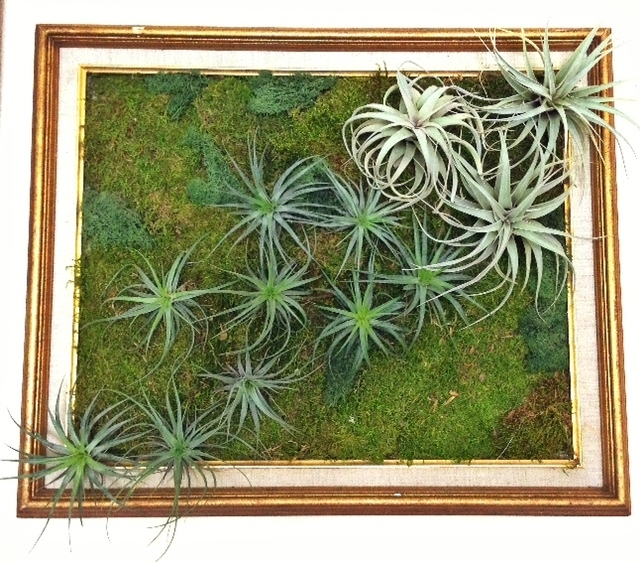 Light Weight Tillandsia Living Wall Art – Soil Less With Living Wall Art (Image 12 of 25)