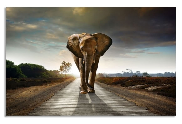 Long Road Home Elephant Canvas Wall Art Picture 34 X 20 Inch Print For Long Canvas Wall Art (View 17 of 25)