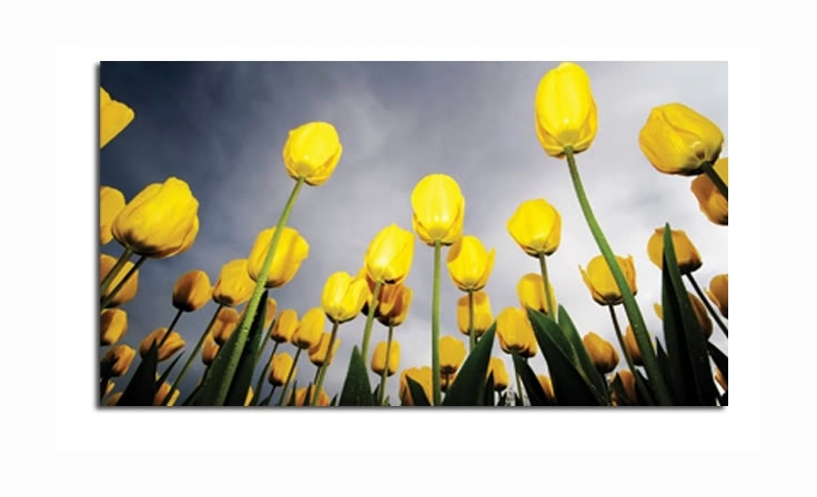 Long Stem Yellow Tulips Field Canvas Wall Art Picture Print 34X20 Pertaining To Long Canvas Wall Art (View 7 of 25)