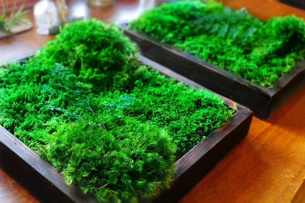 Moss Wall Art 14X12 – Wabimoss With Regard To Moss Wall Art (Image 14 of 25)