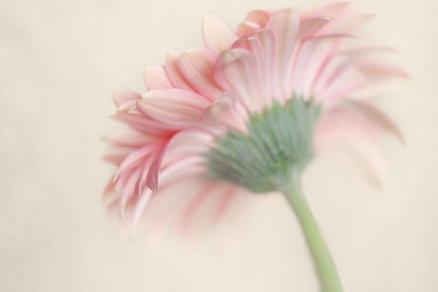 Pink Flower Photography – Pink Nursery Wall Art – Baby Girl Nursery With Regard To Pink Wall Art (View 14 of 25)