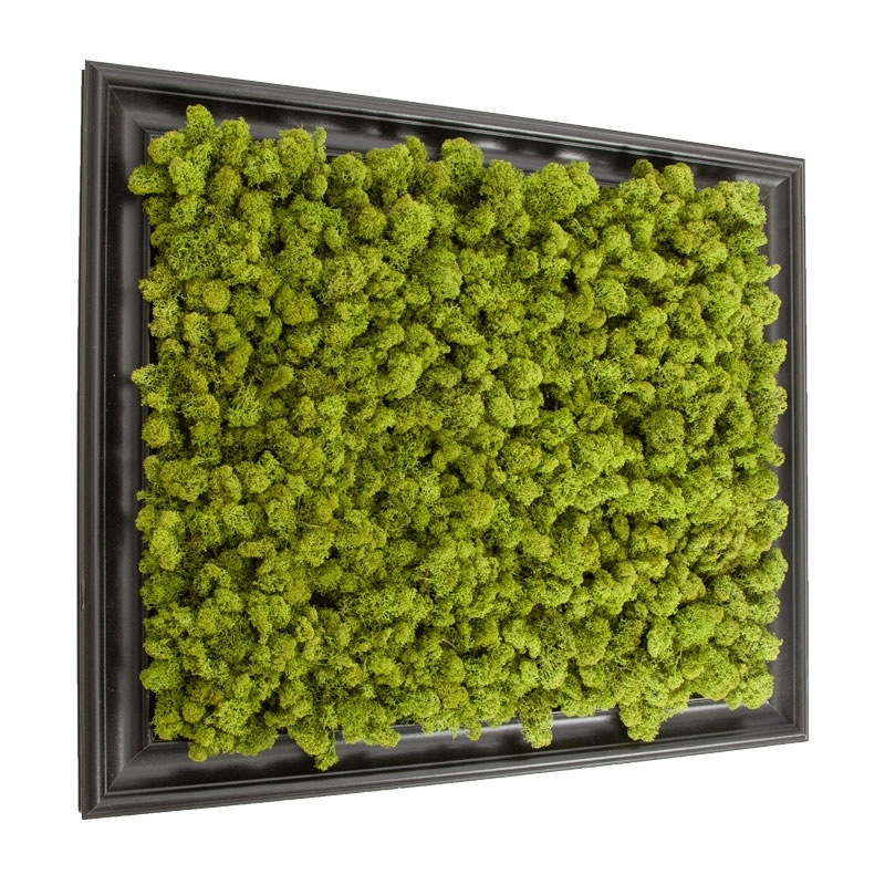 Preserved Lichen Moss Wall Art In Frame 20In. X 24In (Image 23 of 25)