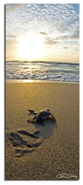 Ready2Hangart Christopher Doherty 'baby Sea Turtle' Canvas Wall Art For Sea Turtle Canvas Wall Art (View 25 of 25)