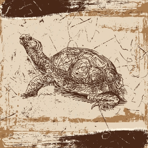 Sea Turtle Canvas Wall Art 36×36 | Trendy Wall Squares Regarding Sea Turtle Canvas Wall Art (View 12 of 25)
