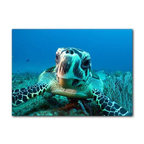 Shop Chris Doherty 'turtle' Canvas Wall Art – On Sale – Free Within Sea Turtle Canvas Wall Art (View 13 of 25)