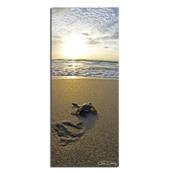 Shop Christopher Doherty 'baby Sea Turtle' Canvas Wall Art – On Sale Throughout Sea Turtle Canvas Wall Art (View 19 of 25)