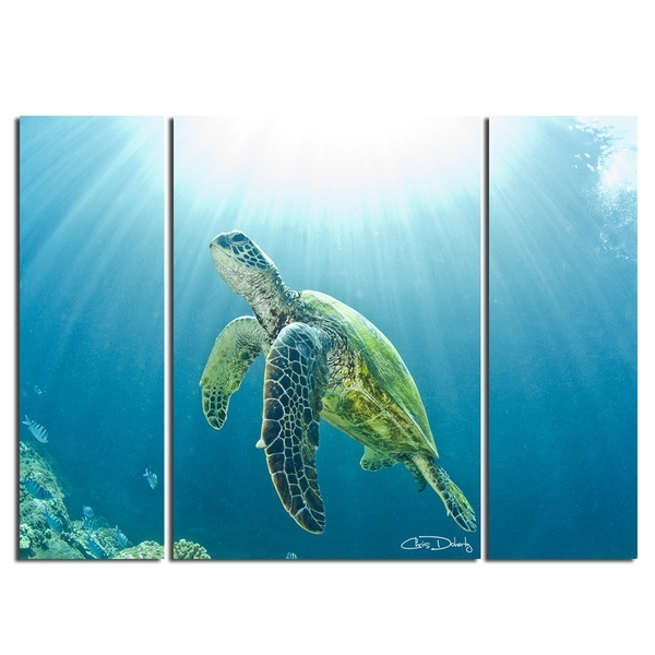 Shop Christopher Doherty 'sea Turtle' Canvas Wall Art (3 Piece Inside Sea Turtle Canvas Wall Art (View 7 of 25)