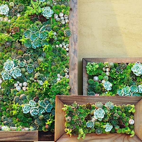 Succulent Frame Workshop At Pacifc Place – Crafts, Home & Garden Throughout Succulent Wall Art (Image 16 of 25)