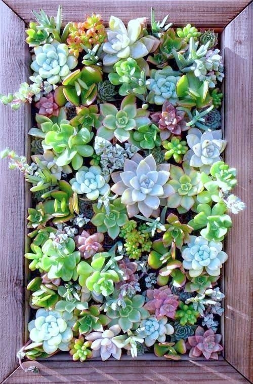 Succulent Wall Art 14 | For My Mama ❤ | Pinterest | Succulent Wall Inside Succulent Wall Art (Image 19 of 25)