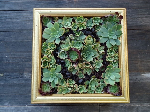 Succulent Wall Art: 9 Steps (With Pictures) With Regard To Succulent Wall Art (Image 21 of 25)