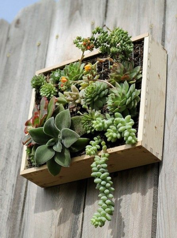 Succulent Wall Art Gardens Pertaining To Succulent Wall Art (Image 24 of 25)