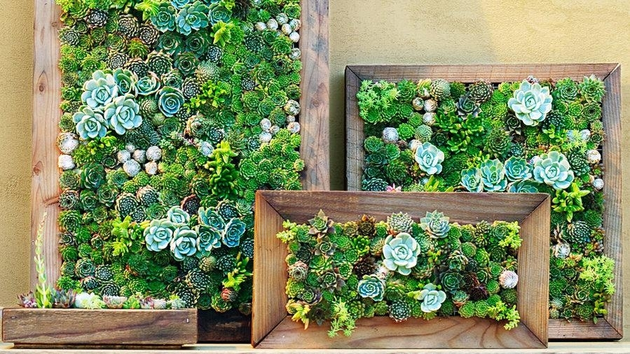 Succulent Wall Hanging How To Make Framed Succulent Wall Art Make Inside Succulent Wall Art (Image 23 of 25)
