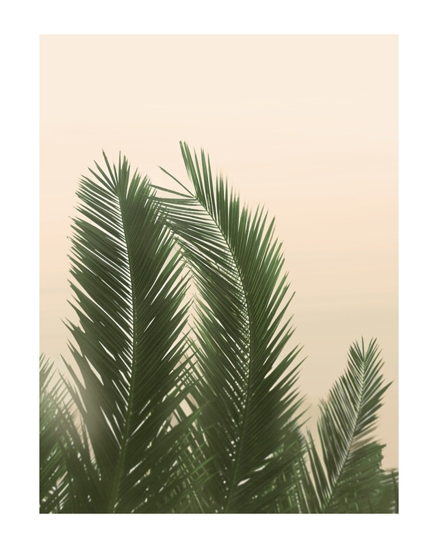 Tropical Palm Tree Wall Art Printswilder California | Minted In Palm Tree Wall Art (View 2 of 25)