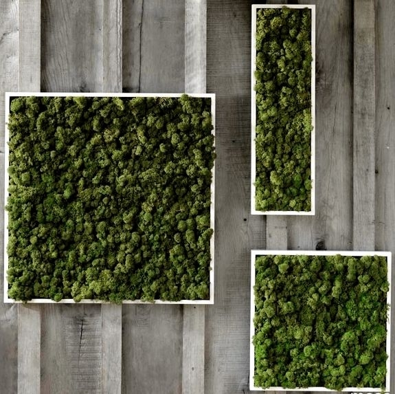 Unusual Home Decor: Fern And Moss Wall Art | Moss | Pinterest | Moss With Moss Wall Art (Image 25 of 25)