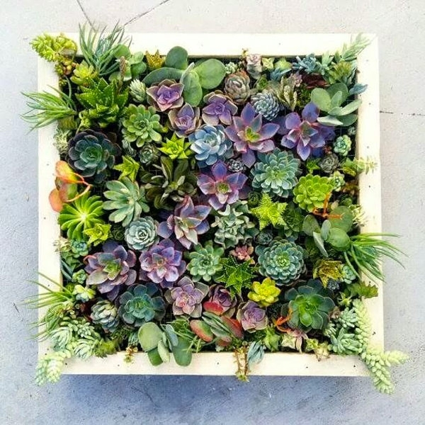 Featured Image of Succulent Wall Art