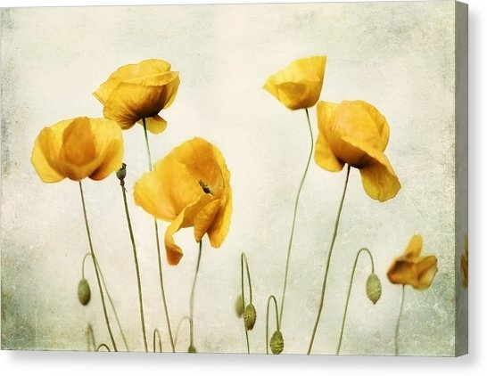 Yellow Poppy Photography - Yellow Poppies - Yellow Flowers - Olive in Floral Wall Art