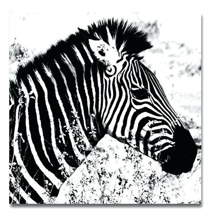 Zebra Wall Art Canvas Zebra Canvas Print Zebra Canvas Prints Canvas for Zebra Canvas Wall Art